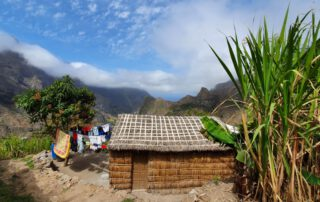Traditional house made of locally growing plants - Santo Antao